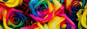 Lumea e plin� de culori – dar �tii c�te?