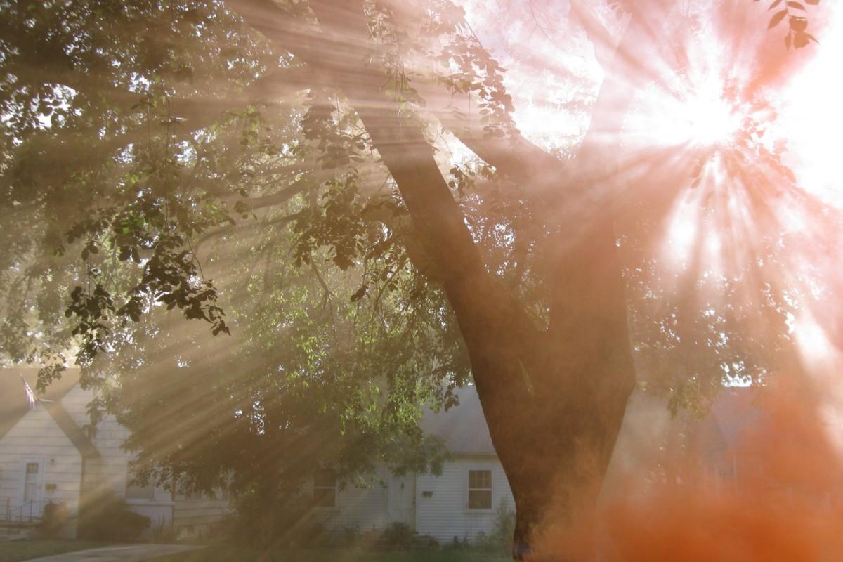 Razele soarelui printre crengi