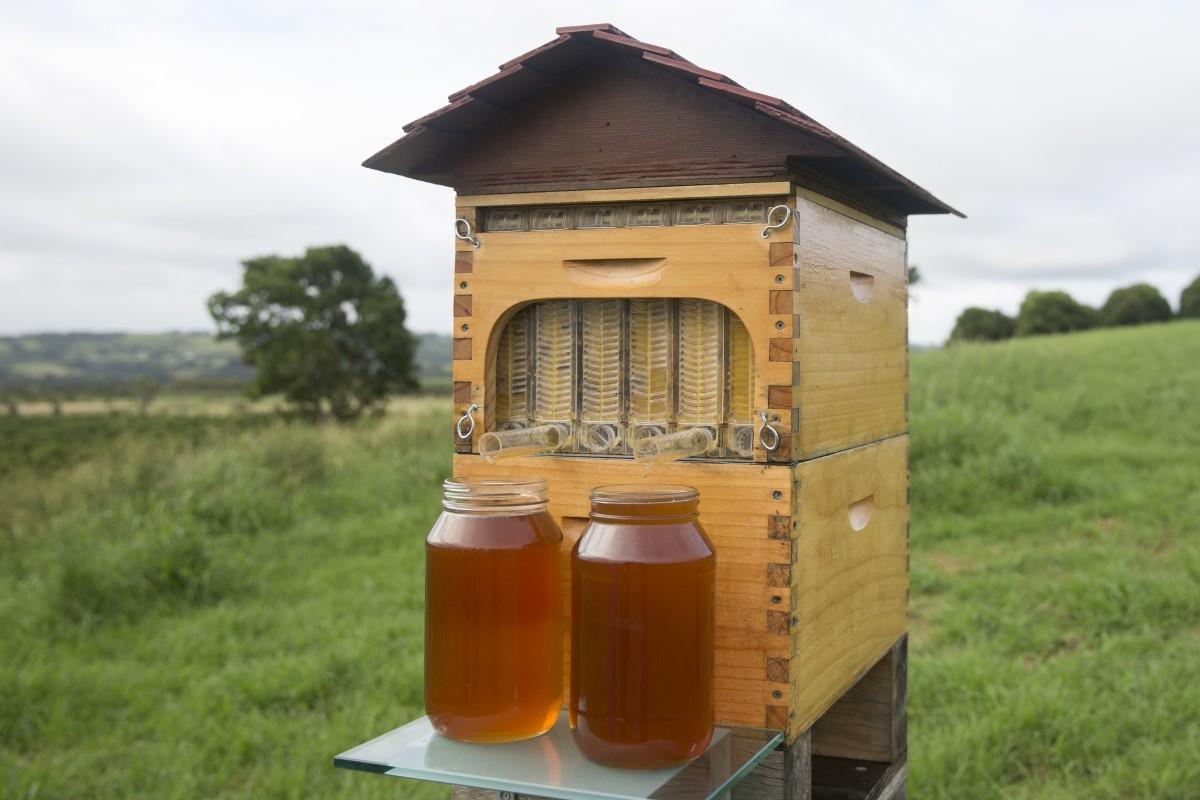 Flow Hive