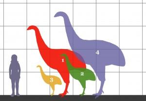 Dinornithidae